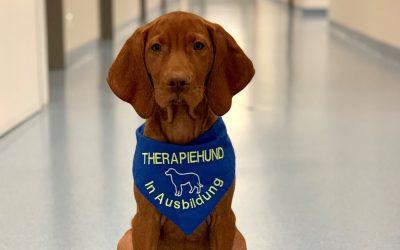Therapiehund Ludwig